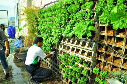 Vertical Gardening in Cinder Blocks