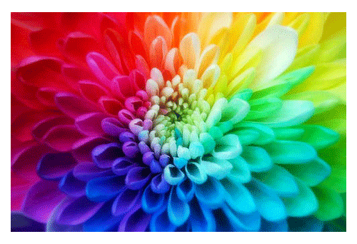 loto coloreado
