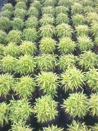 http://tukangtamanqu.blogspot.com/2014/11/tanaman-hias-tanaman-untuk-taman.html