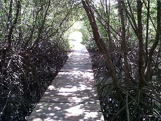 Pemandangan di hutan mangrove Bali