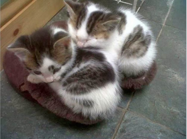 Funny cats - part 83 (40 pics + 10 gifs), cat pics, kittens sleep in shoes