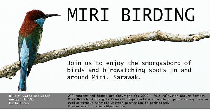 Birdwatching In Miri, Sarawak