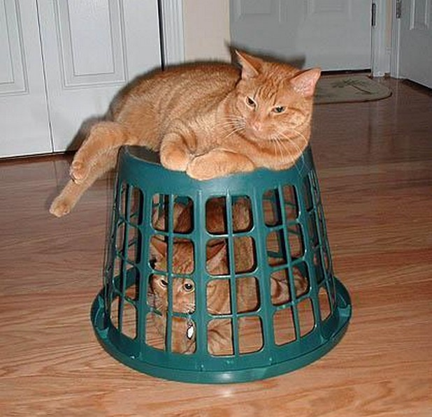 animals i admire cat in basket with cat on basket