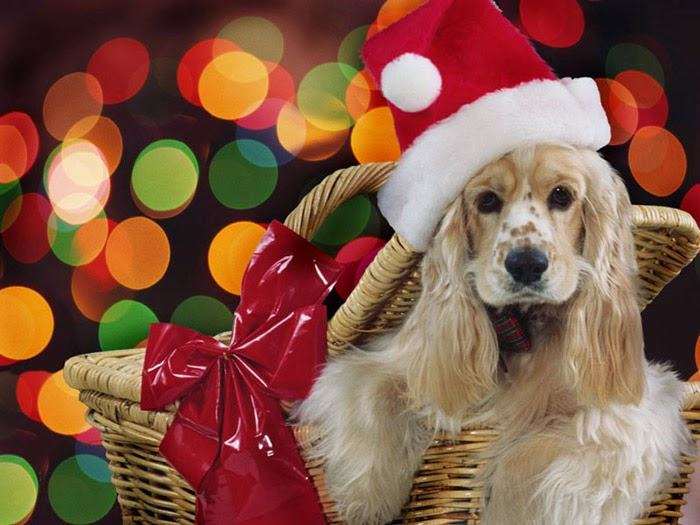 Santa Dog - Free Christmas Wallpaper