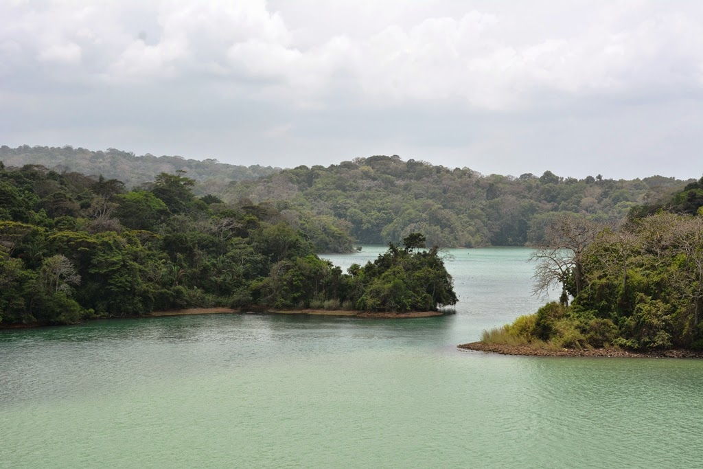 Gatun Lake Panama woods