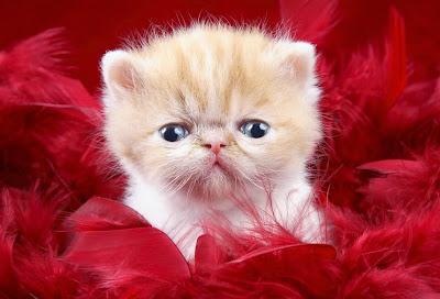 I do not like it here kitten cat