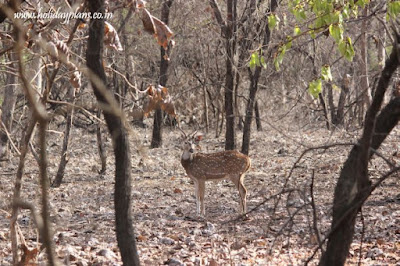 Spotted the spotted deer
