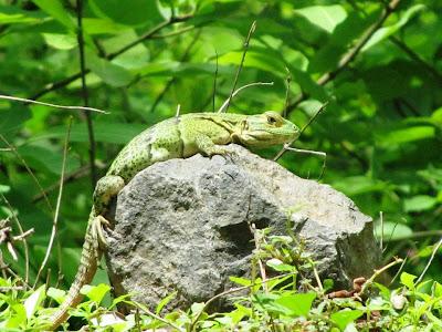 wildlife Nicaragua