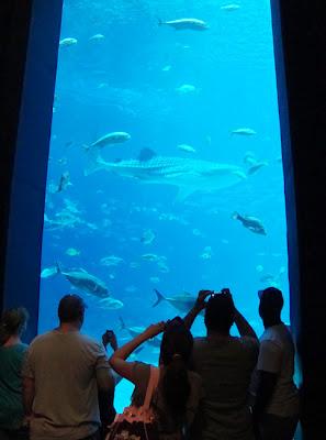 Ocean Voyager gallery, Georgia Aquarium