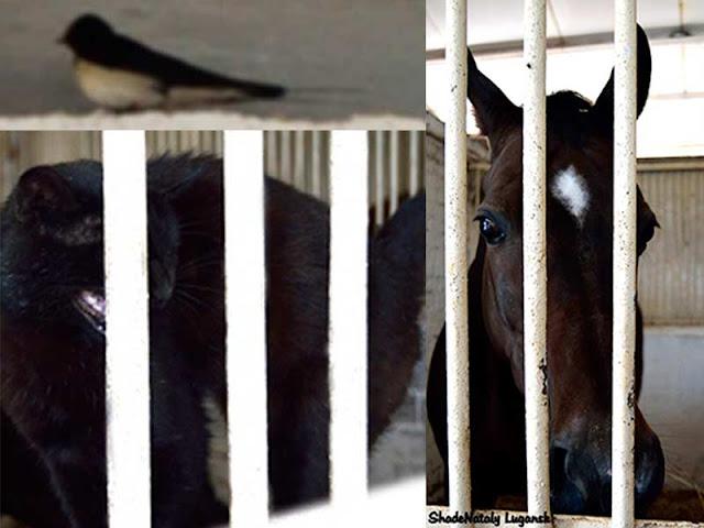 Лошади Луганск