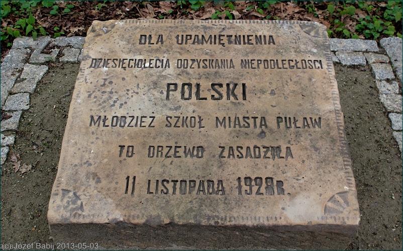 Dąb Niepodległości na Placu Niepodległości w Puławach