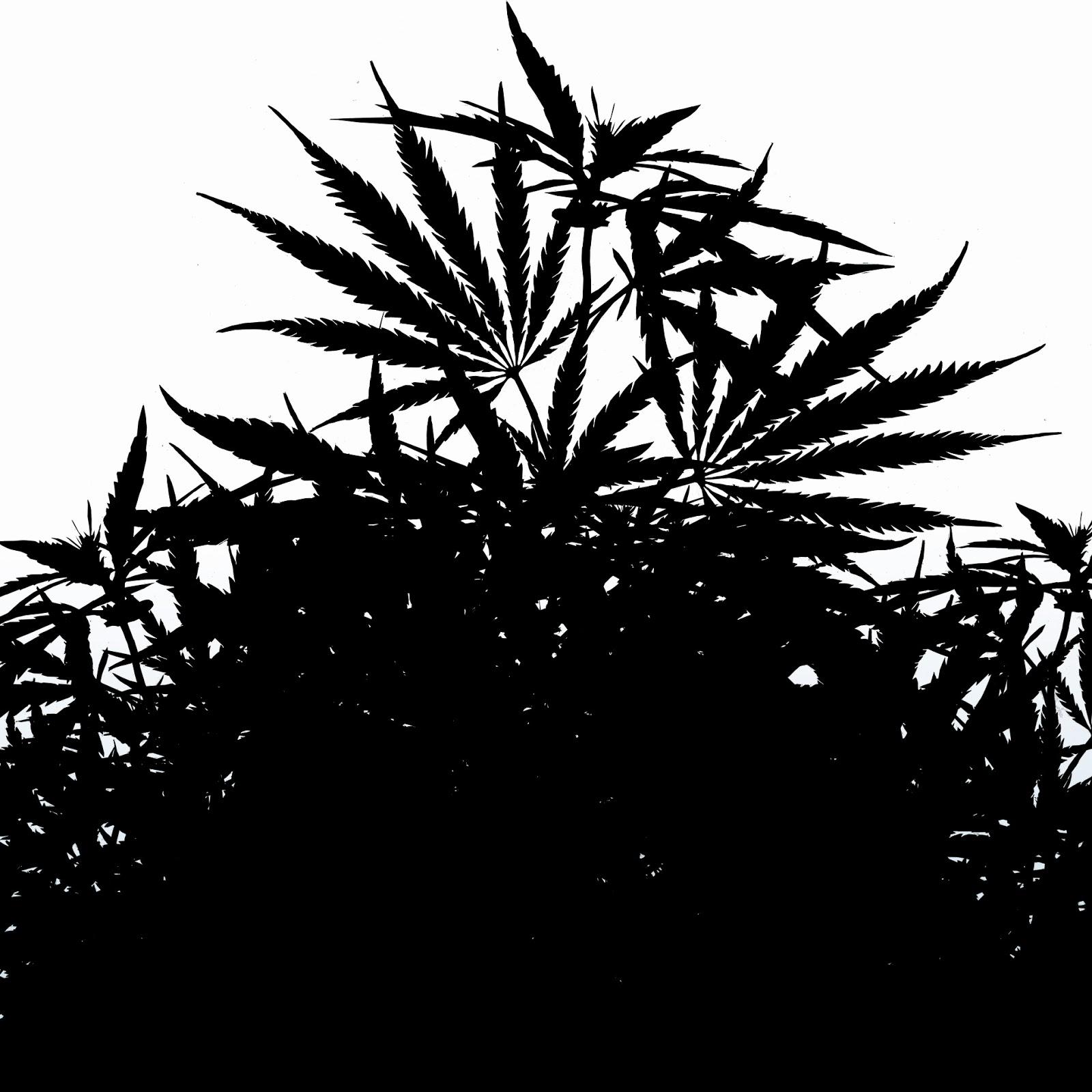 planta, contraluz,