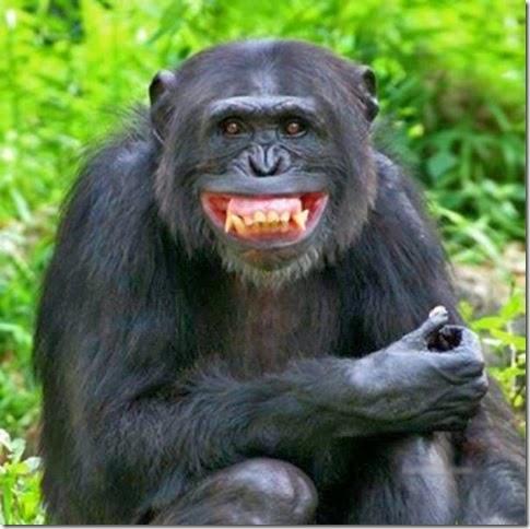 Aksi Lucu Foto Monyet
