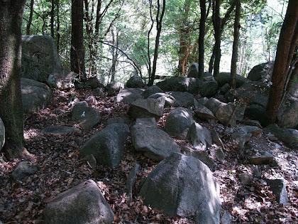 Entremig d'alzines i faigs apareixen, més o menys agrupats, grans blocs de granodiorita