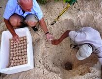 Conservation Seychelles