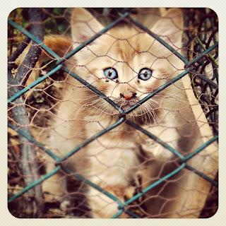 Istanbul Stray Kitten