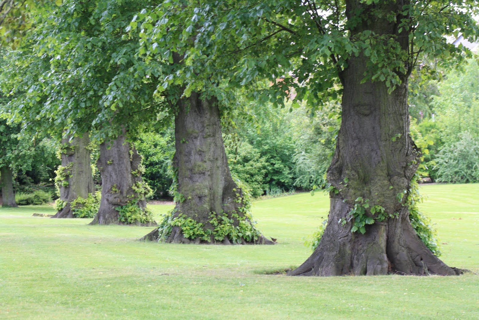 Trees in front of Hospital, Carlisle