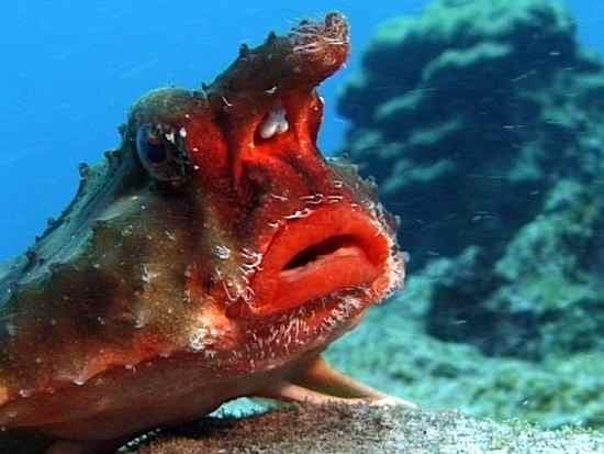 Ten animals are unique and strange looking the true for Weird looking fish