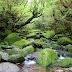 屋久島の旅(森編)