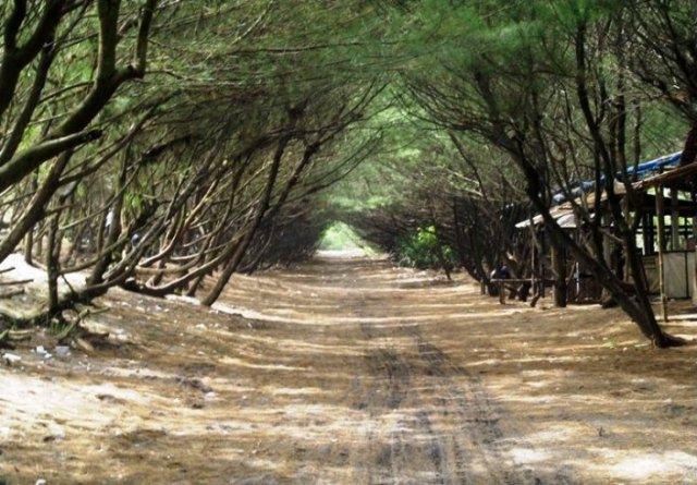 Wisata Pantai di Jogja Yogyakarta - Pantai Kuwaru Bantul