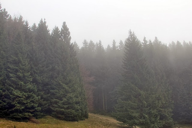 foggy forest in November
