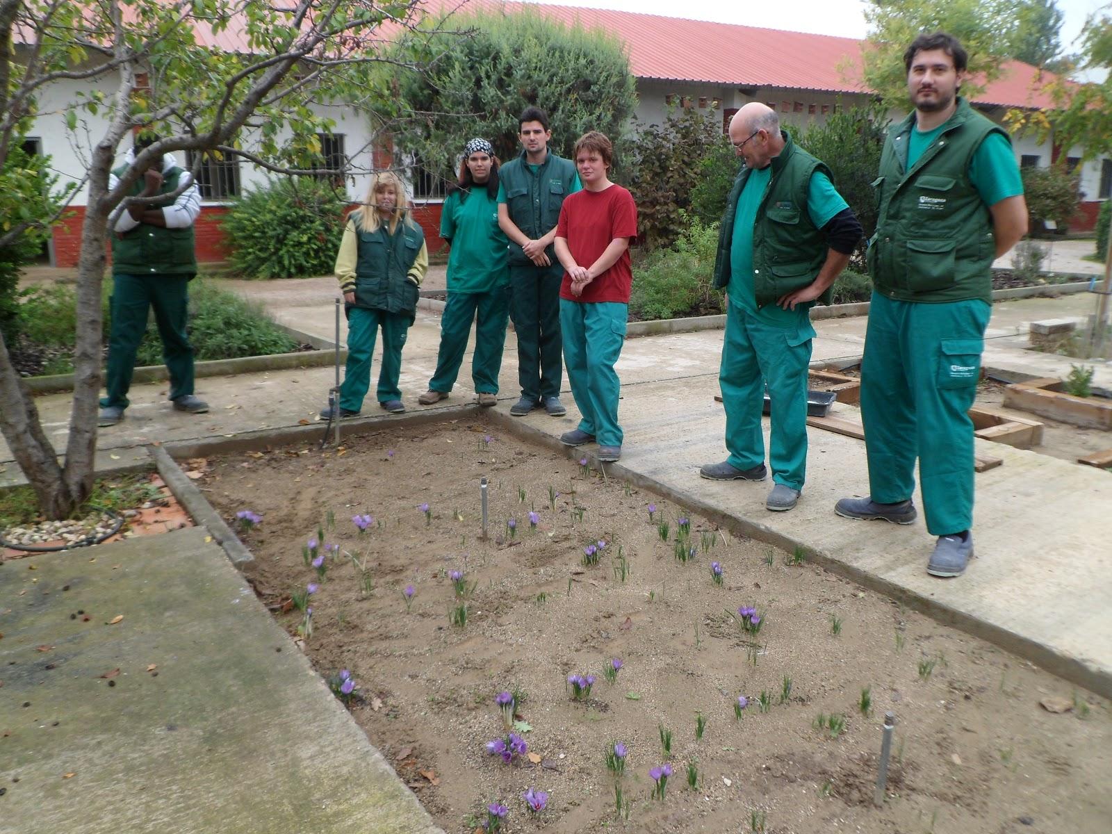 Escuela municipal de jardiner a el pinar octubre 2012 for Escuela de jardineria