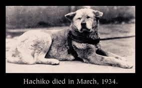 قصة وفاء الكلب هاتشيكو