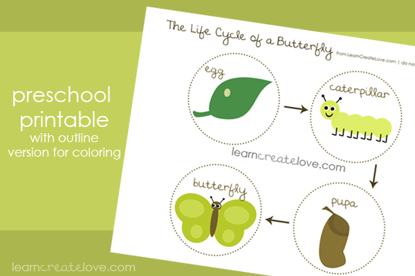 butterfly life cycle for preschool free montessori biology printables for children 818