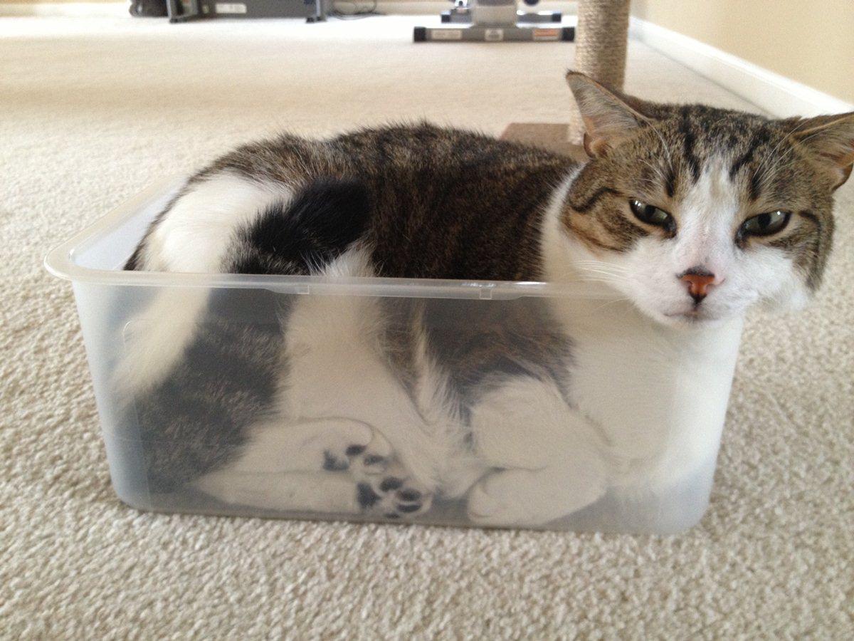 hilarious cats - photo #20