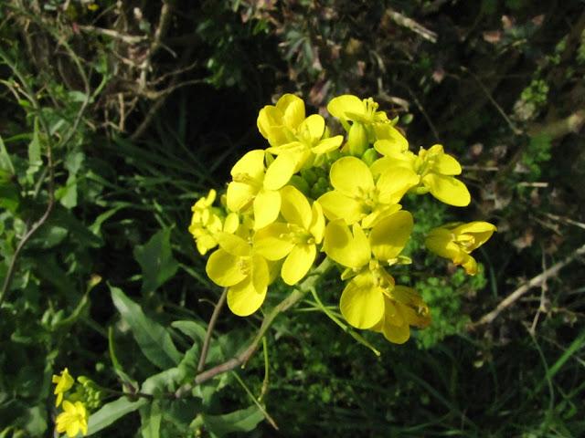 yellow-roadside