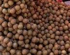 brunei buah Langsat