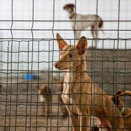 animal cruelty statistics 2014