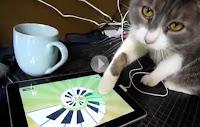 Gato brincando com jogos para iPad