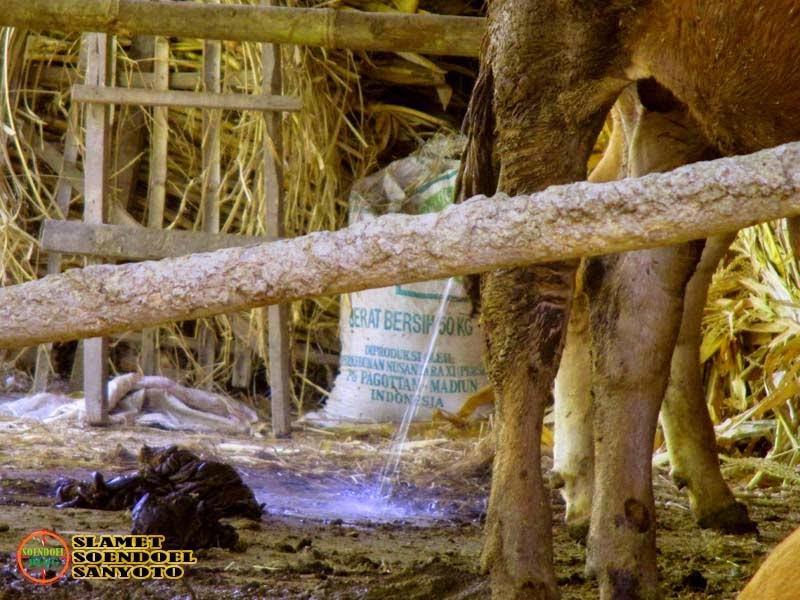 Sederas Water Canon