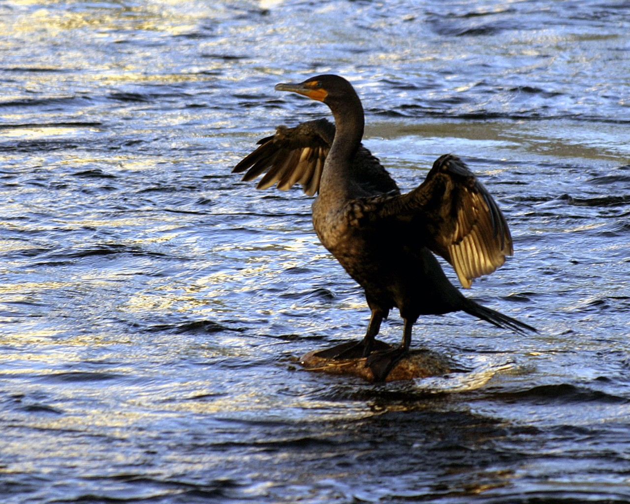 PicturesPool: Beautiful Water Birds pictures