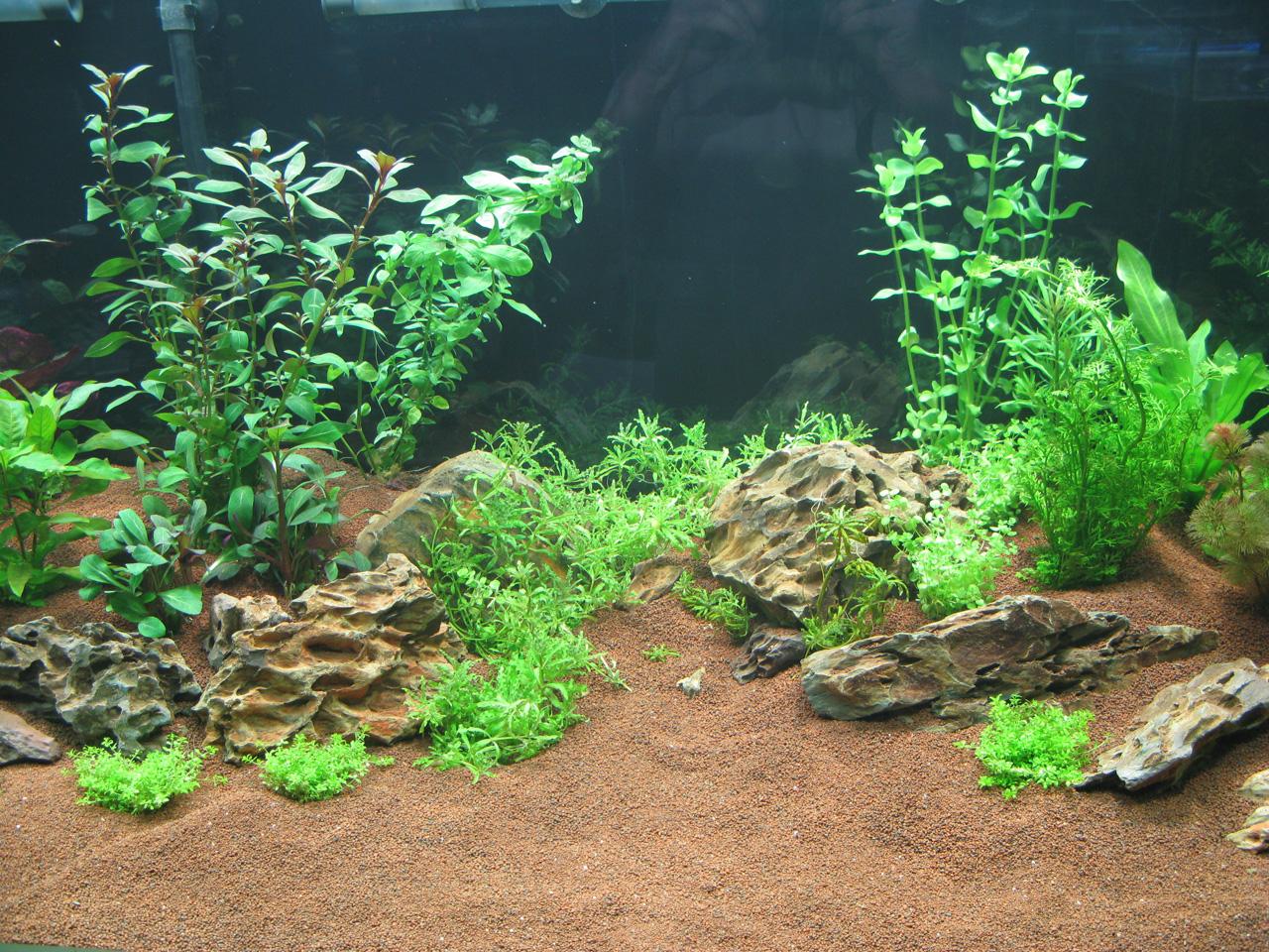Aquarium en Aquascaping: 13 - Les plantes
