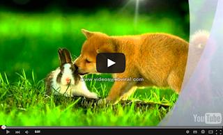 El perro y el conejo (Reflexión)