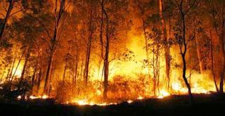 Foto Kebakaran Riau 2014 Terbaru Kabut Asap Berbahaya