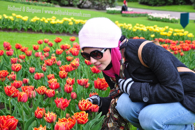 holiday to holland and belgium with premium beautiful at keukenhof with beautiful tulips