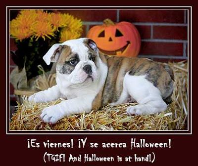 puppy bulldog Spooky Halloween