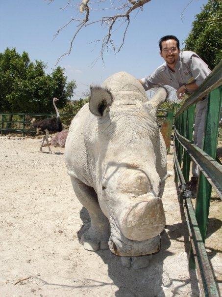 rinoceronte blanco en africam safari