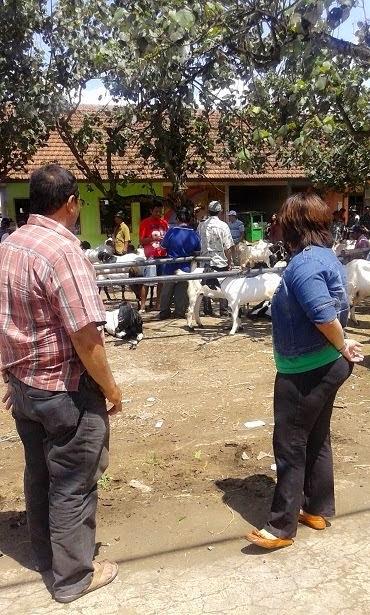Kunjungan ke Pasar Ternak tgl 21 April 2014