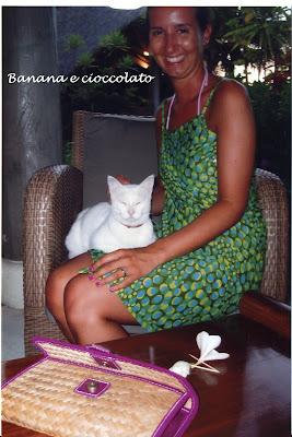gatto bianco, mare