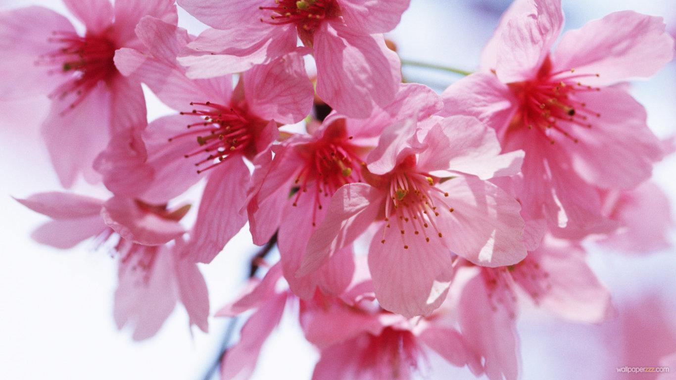 http://2.bp.blogspot.com/-nP6vXvkmA2c/TcLEmDVdo3I/AAAAAAAAJS0/hZVHyGlnZgI/s1600/spring-flowers.jpg
