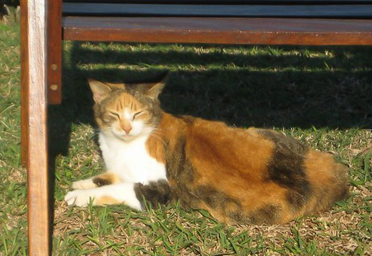 Cat from Durban South Africa