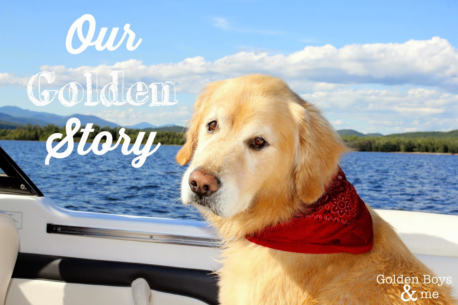 Story of a family that loves Golden Retrievers-www.goldenboysandme.com