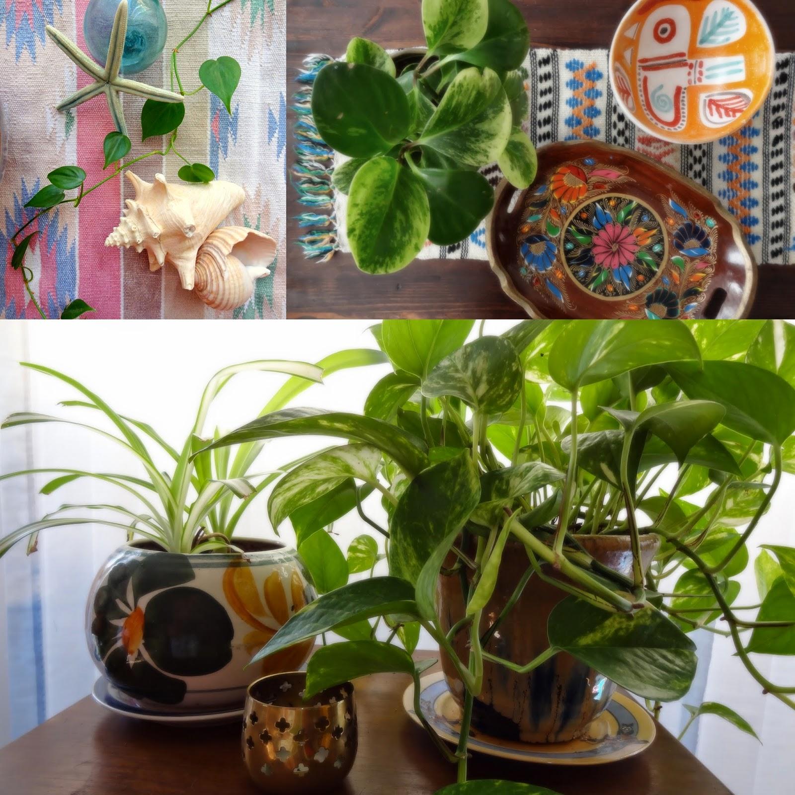 Shells Plants Boho Decor