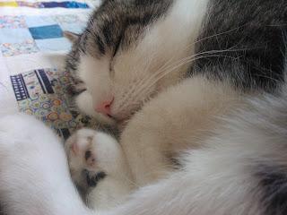 Kissa Talviomenoita-tilkkupeitolla söpönä ja pehmeänä