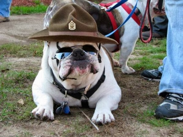 Funny Bulldog Facts Latest Cute