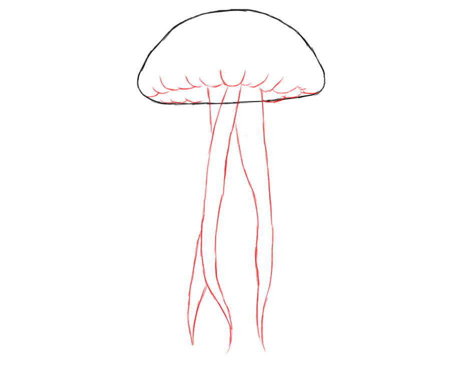 How to draw jellyfish for How to draw fish